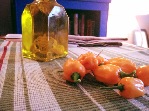 Habanero-Infused Olive Oil